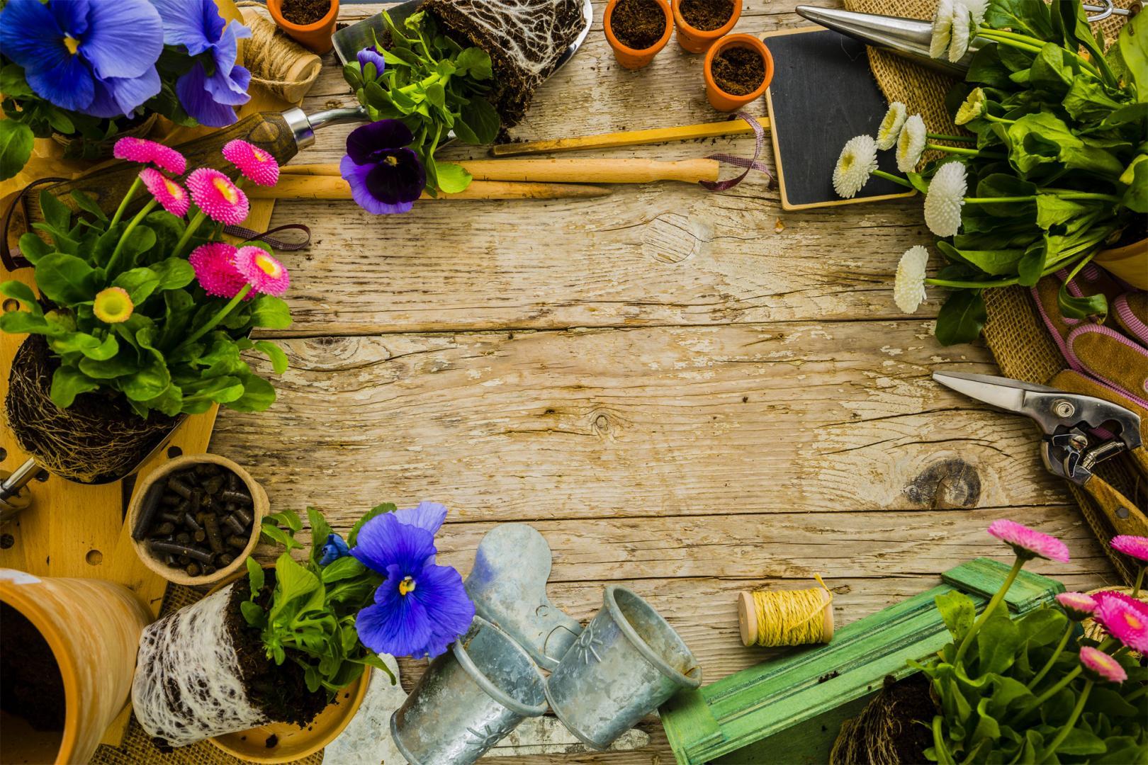 Producteur de plantes vivaces et gramin es reims ch lons for Entretien plantes vivaces